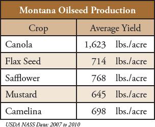 biodiesel-1-montana-oilseed